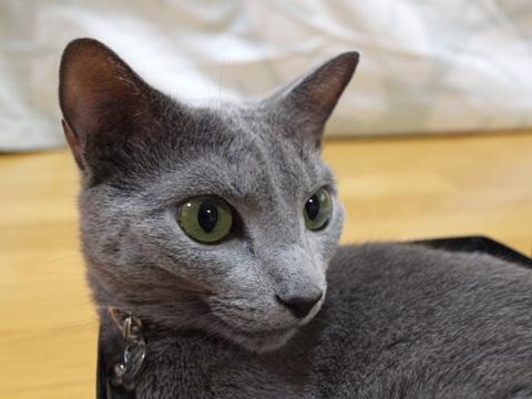 ニコライ(2010.08.25)