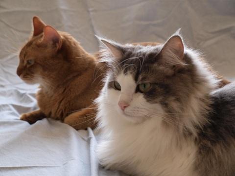 ジョゼフィンとフレイヤ(2010.08.28)
