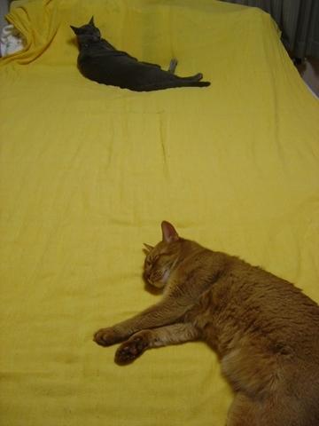 夏のお昼寝04(2010.08.30)