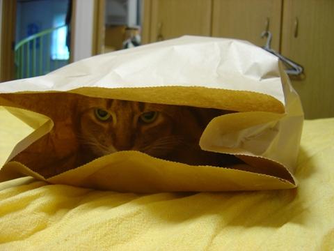 袋好き01(2010.08.31)