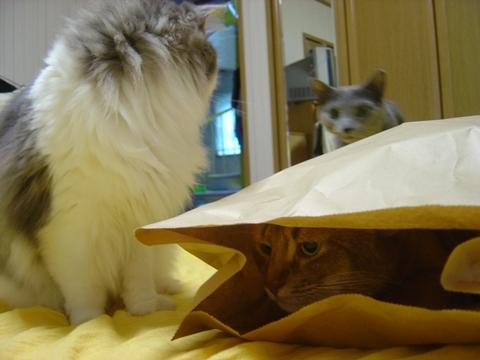 袋好き02(2010.08.31)