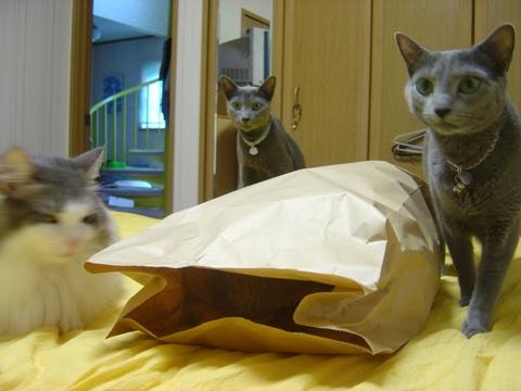 袋好き04(2010.08.31)