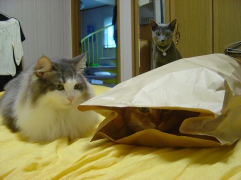 袋好き05(2010.08.31)