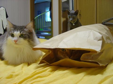 袋好き06(2010.08.31)