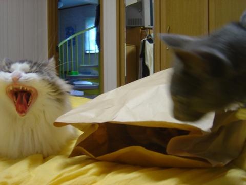 袋好き08(2010.08.31)
