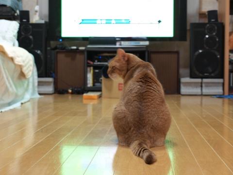 くだまきジョゼ(2010.09.01)