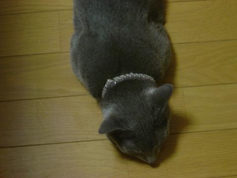 だらだら02(2010.09.07)
