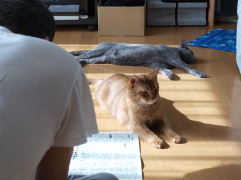 平和な朝01(2010.09.12)