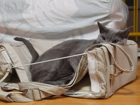 キャリーバッグの使い方01(2010.09.18)