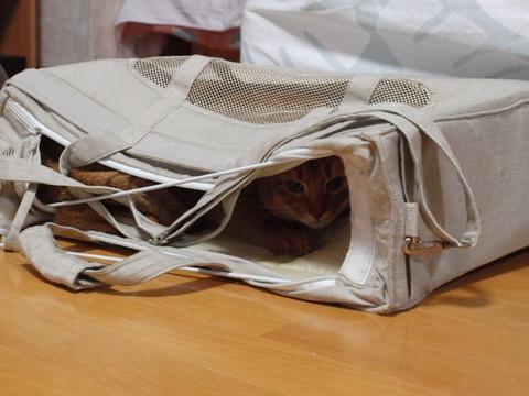 キャリーバッグの使い方04(2010.09.18)