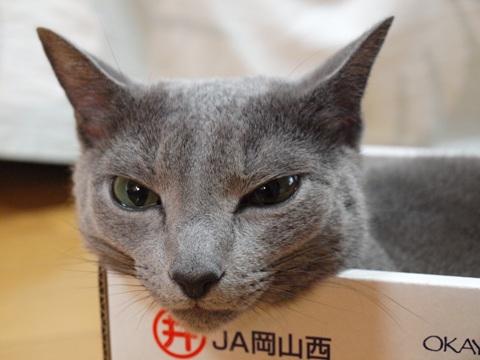 箱入り~♪01(2010.09.21)