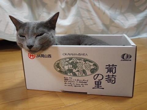 箱入り~♪02(2010.09.21)