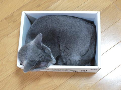 箱入り~♪03(2010.09.21)