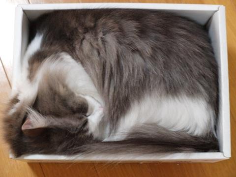 箱入りフレ(2010.09.23)
