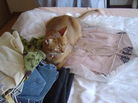 秋の衣替え02(2010.09.26)