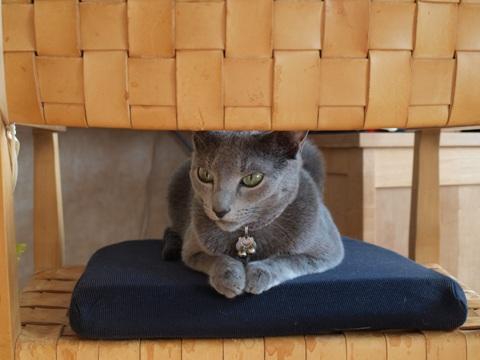 椅子取りゲーム03(2010.09.27)