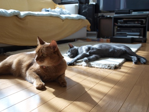 猫神様01(2010.09.27)