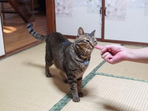 梵くん(2010.10.11)