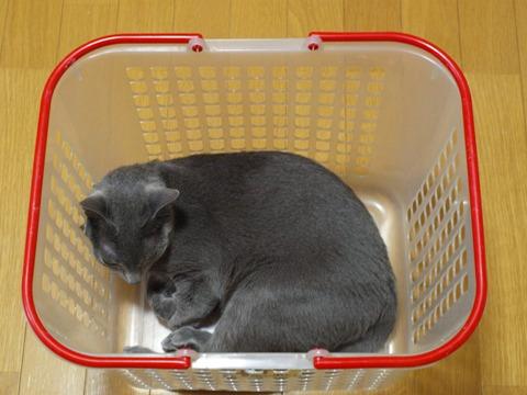 籠ニコ(2010.10.17)