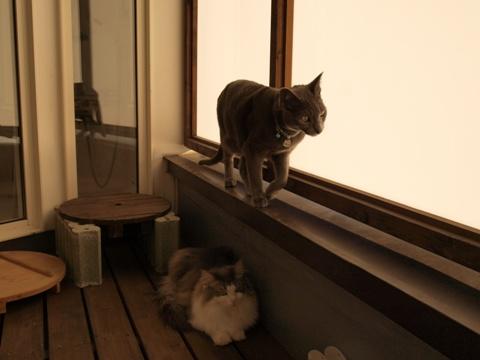 ベランダ日和02(2010.10.23)