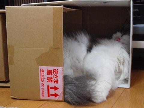 フレつぼ02(2010.10.24)