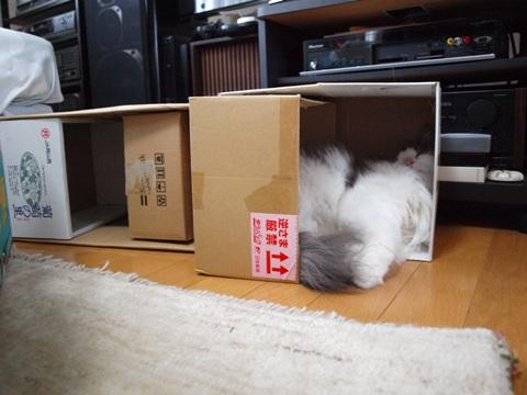 フレつぼ03(2010.10.24)