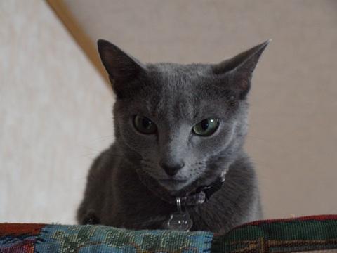 涼しい顔のニコ01(2010.10.31)
