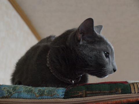 涼しい顔のニコ02(2010.10.31)