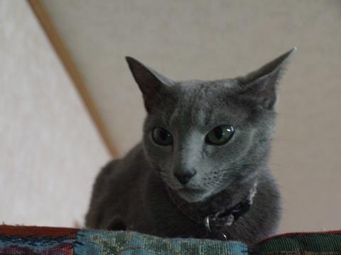 涼しい顔のニコ04(2010.10.31)