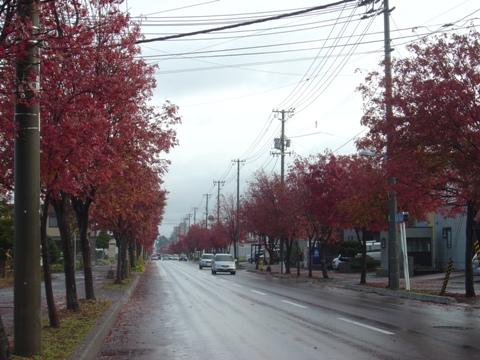 紅葉ナナカマド01(2010.11.02)