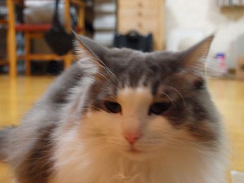 ノーファインダーのフレイヤちゃん03(2010.11.05)