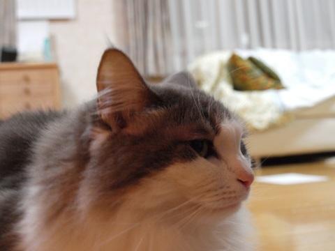 ノーファインダーのフレイヤちゃん04(2010.11.05)