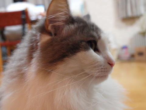 ノーファインダーのフレイヤちゃん05(2010.11.05)