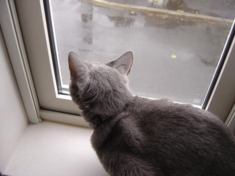 雨だにゃ(2010.11.10)