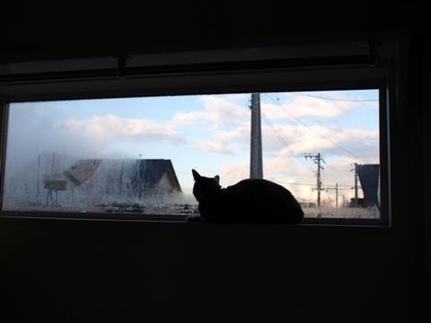 冬の窓辺で01(2010.11.15)