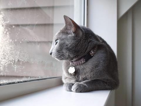 冬の窓辺で03(2010.11.15)