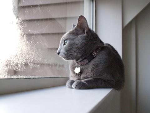 冬の窓辺で04(2010.11.15)