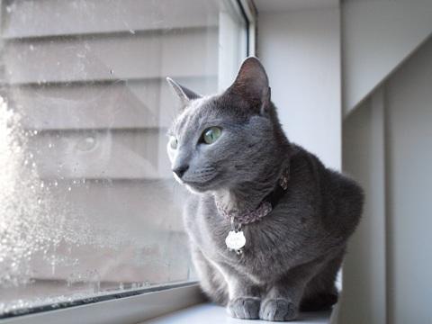 冬の窓辺で05(2010.11.15)