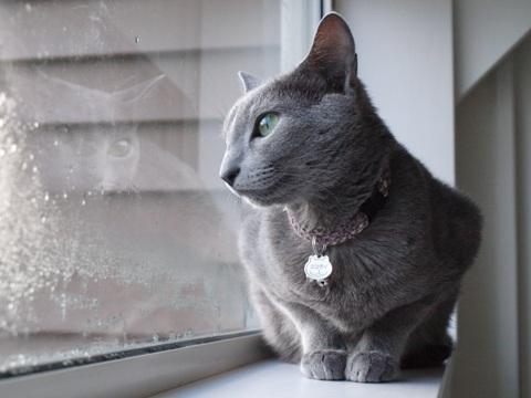 冬の窓辺で06(2010.11.15)