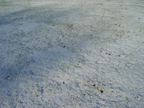 芝生も雪(2010.11.15)
