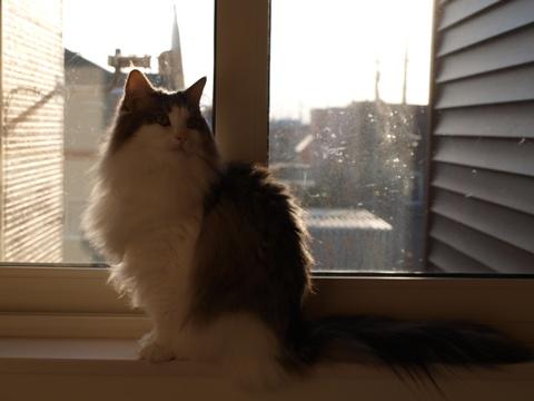 フレイヤも窓辺で(2010.11.25)