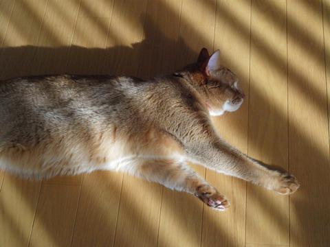 きらきらジョゼ01(2010.11.27)