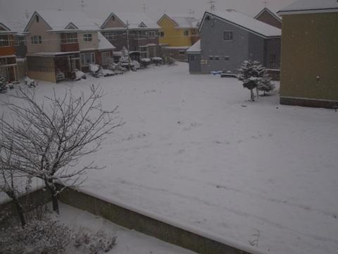 冬です01(2010.11.29)