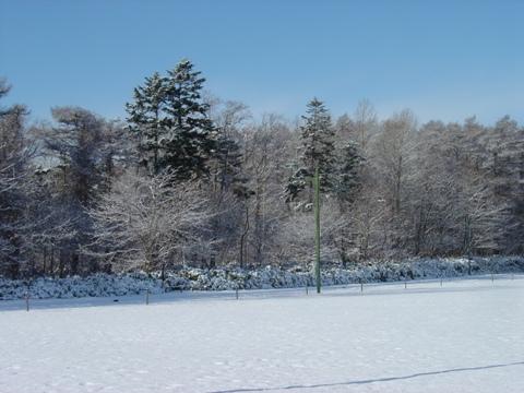 冬です02(2010.11.29)