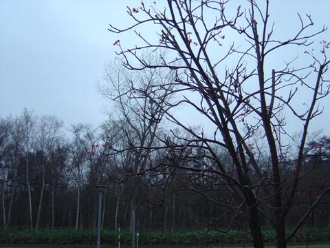 雪なし景色も最後かな(2010.12.14)