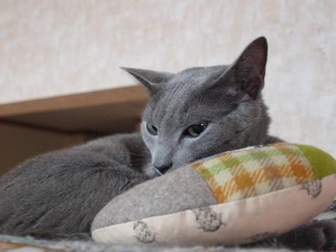 くつろぎニコ(2010.12.28)