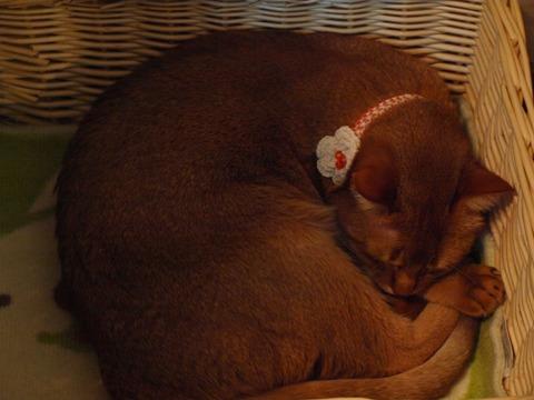 おニュウの首輪のジョジョ02(2011.01.03)