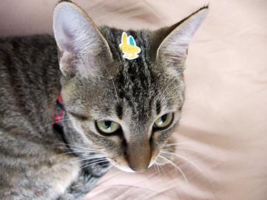 99%猫3