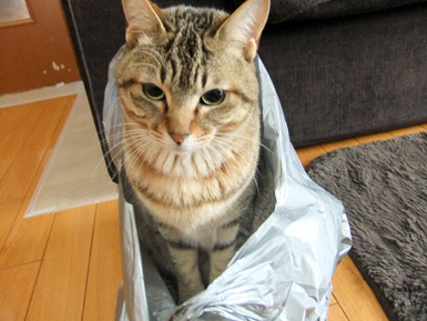 インビニール袋1