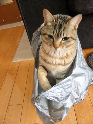インビニール袋3